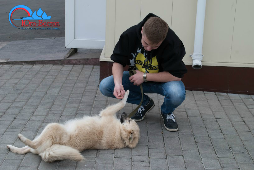 Поездка волонтеров в ПИФ, город Донецк